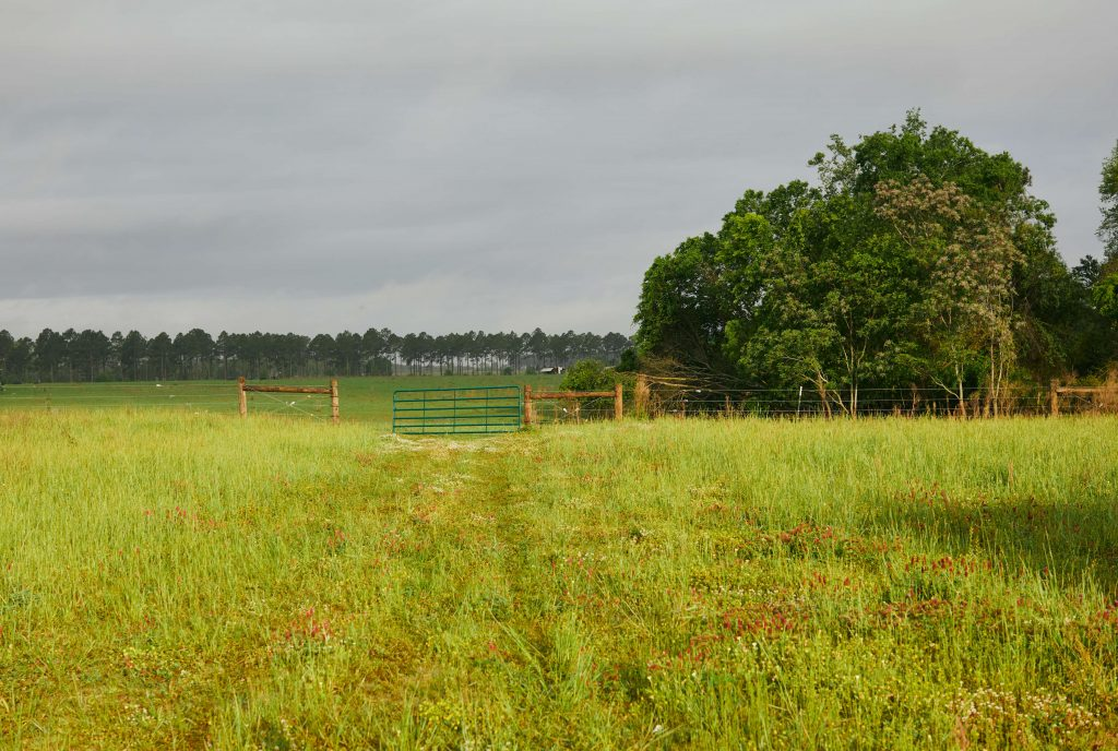 White Oak Pastures field